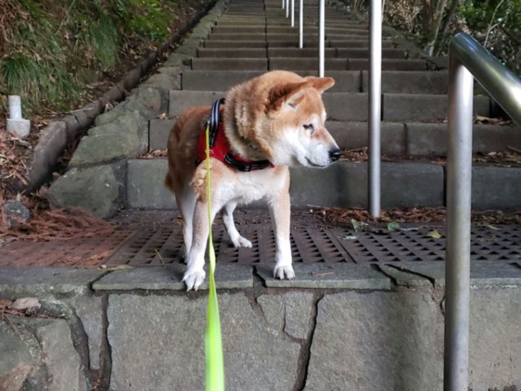階段は降りません。